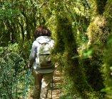 The enchanted Farfa humid woods