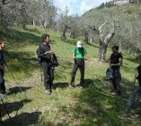 Up on the mountain among millenary olive trees