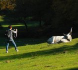 free livestock in Cottanello's lawns