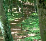 beech forest on Mount Venere