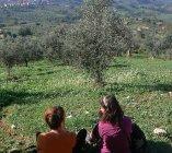 La distesa del paesaggio olivicolo si stende sotto di noi