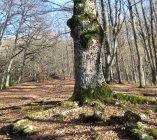 Paesaggio pastorale/forestale con querce secolari