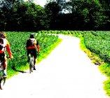 In bici sul fondovalle